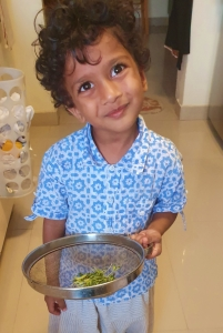 Cute child happy with his small harvest of microgreens