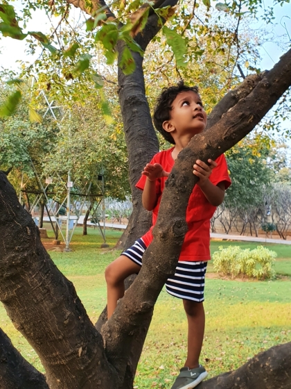 child in red shirt climbing a tree in a park