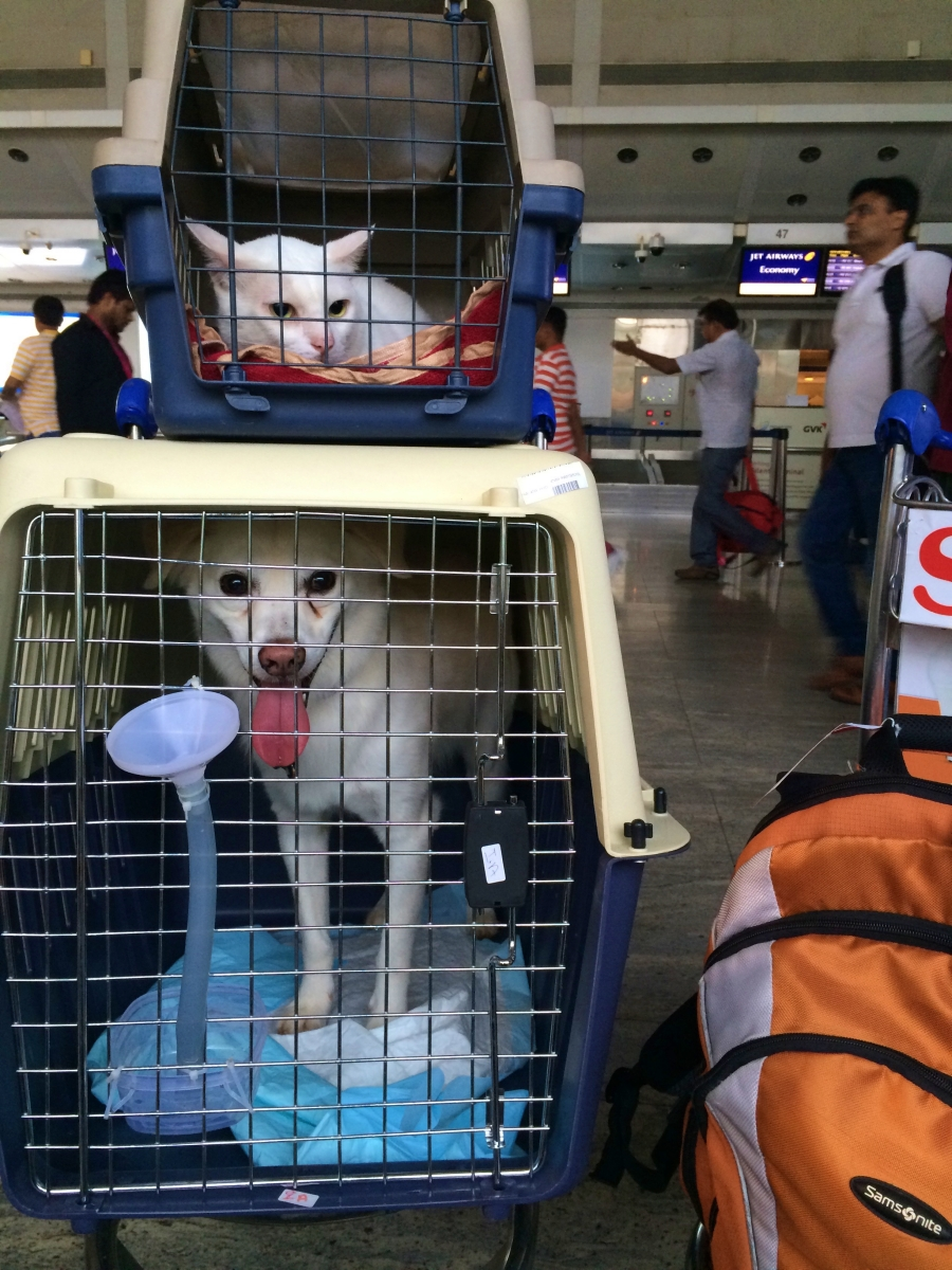 dog and cat in separate carriers at the airport waiting to board